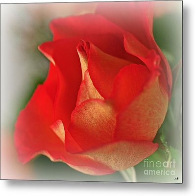 Soften Rose Metal Print