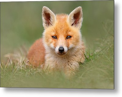 Softfox -young Fox Kit Lying In The Grass Metal Print by Roeselien Raimond