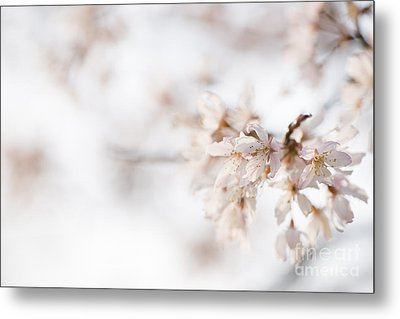 Softly Blossom Metal Print by Anne Gilbert
