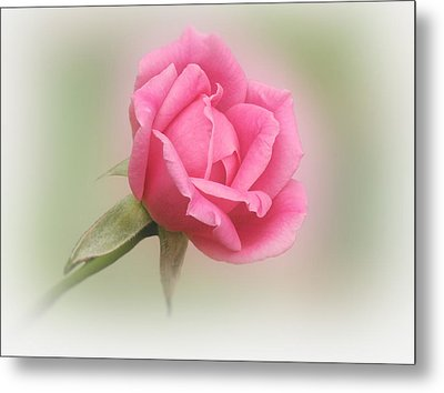 Softly Pink Metal Print by Sandy Keeton