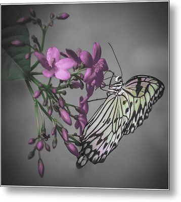 Softly Reflected On A Wing Metal Print by Jill Balsam