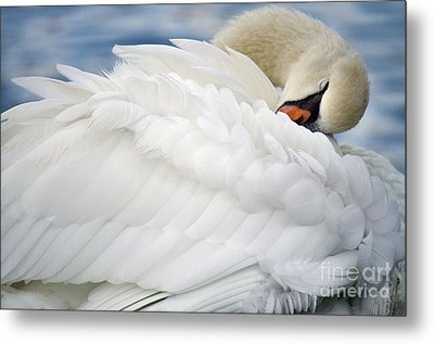 Softly Sleeping Metal Print by Deb Halloran