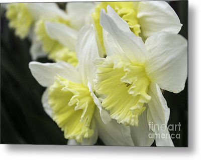 Softly Spring Metal Print by Arlene Carmel