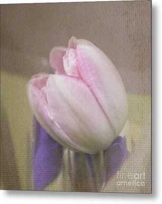 Softly Tulip Metal Print by Arlene Carmel