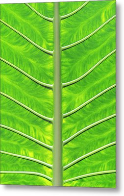 Solar Panel Leaf Veins Metal Print