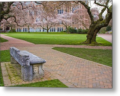 Metal Print featuring the photograph Solitary Bench by Sonya Lang