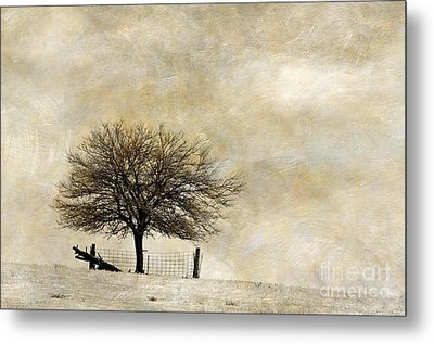 Solitary - D003455-a Metal Print by Daniel Dempster