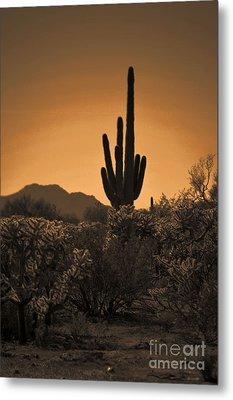 Solitary Saguaro Metal Print