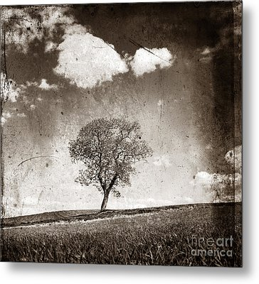Solitary Tree In Limagne Landscape. Auvergne. France Metal Print by Bernard Jaubert