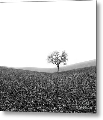 Solitary Tree In Winter. Auvergne. France Metal Print by Bernard Jaubert