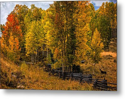 Metal Print featuring the photograph Solitude by Ken Smith
