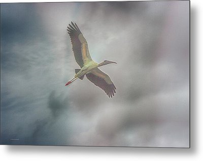 Metal Print featuring the photograph Solo Flight by Dennis Baswell