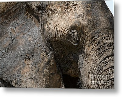 Metal Print featuring the photograph Some Elephants Prefer Mud by Chris Scroggins