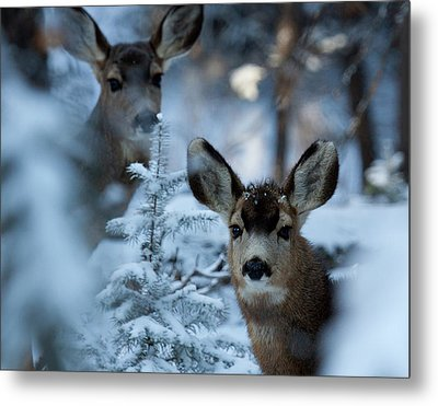 Metal Print featuring the photograph Somebody To Watch Over Me by Jim Garrison