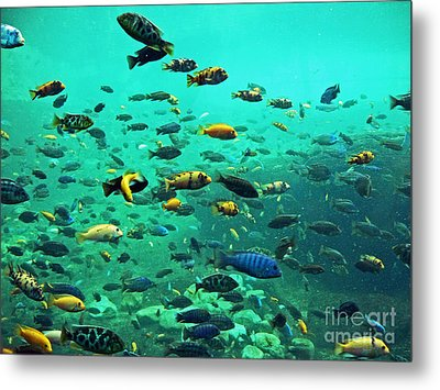Something Fishy Metal Print by Kevin Fortier