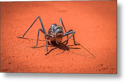 Something To Bug You - Armored Katydid Photograph Metal Print