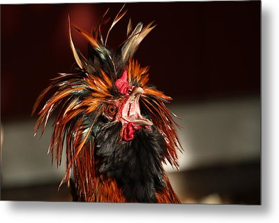 Something To Crow About Metal Print by Lynn Sprowl