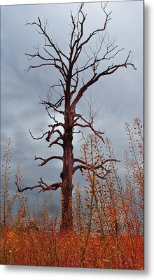 Something Wicked This Way Comes Metal Print by Wayne King
