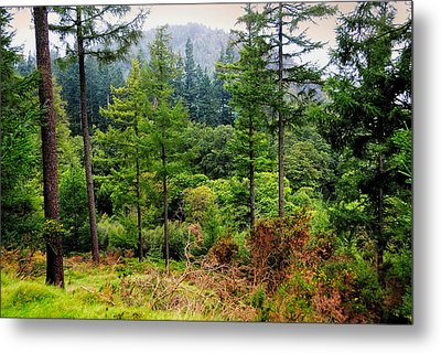 Somewhere In The Forest Over Upper Lake. Glendalough. Ireland Metal Print by Jenny Rainbow