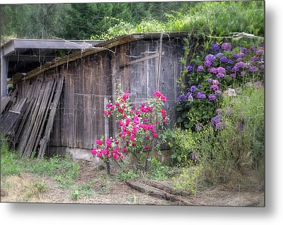 Somewhere Near Geyserville Ca Metal Print by Joan Carroll