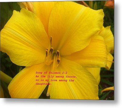 Metal Print featuring the photograph Song Of Solomon 2  2 by Saribelle Rodriguez