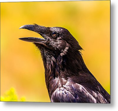 Song Of The Raven Metal Print