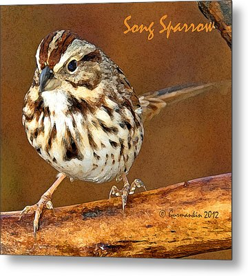 Metal Print featuring the photograph Song Sparrow On Tree Branch by A Gurmankin