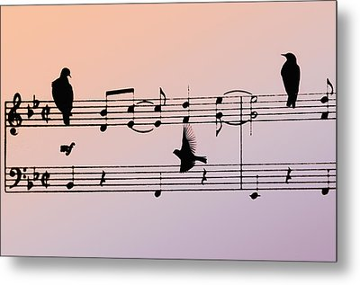 Songbirds Metal Print