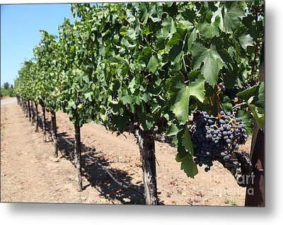 Sonoma Vineyards In The Sonoma California Wine Country 5d24491 Metal Print by Wingsdomain Art and Photography