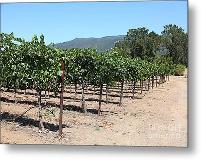 Sonoma Vineyards In The Sonoma California Wine Country 5d24492 Metal Print by Wingsdomain Art and Photography
