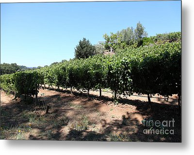 Sonoma Vineyards In The Sonoma California Wine Country 5d24499 Metal Print by Wingsdomain Art and Photography