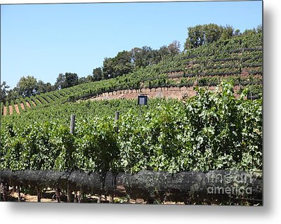 Sonoma Vineyards In The Sonoma California Wine Country 5d24503 Metal Print by Wingsdomain Art and Photography