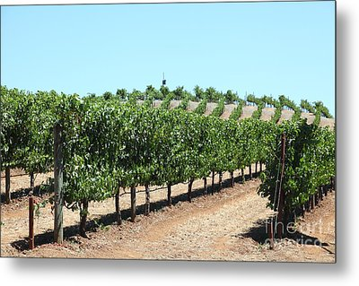 Sonoma Vineyards In The Sonoma California Wine Country 5d24506 Metal Print by Wingsdomain Art and Photography