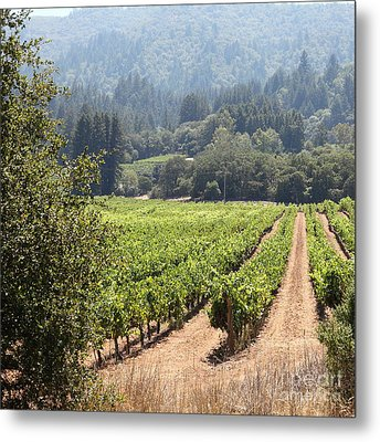 Sonoma Vineyards In The Sonoma California Wine Country 5d24515 Square Metal Print by Wingsdomain Art and Photography