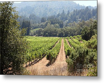 Sonoma Vineyards In The Sonoma California Wine Country 5d24515 Metal Print by Wingsdomain Art and Photography