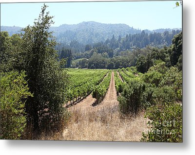 Sonoma Vineyards In The Sonoma California Wine Country 5d24516 Metal Print by Wingsdomain Art and Photography