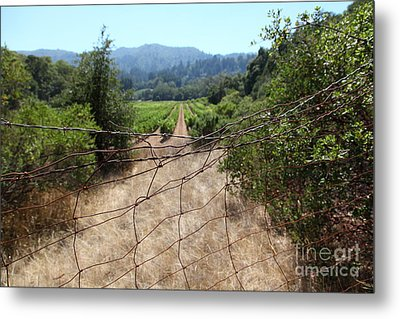 Sonoma Vineyards In The Sonoma California Wine Country 5d24520 Metal Print by Wingsdomain Art and Photography