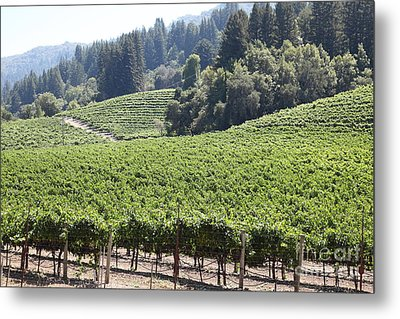 Sonoma Vineyards In The Sonoma California Wine Country 5d24539 Metal Print by Wingsdomain Art and Photography