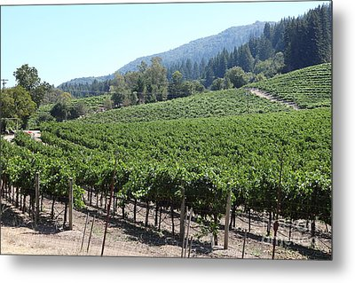 Sonoma Vineyards In The Sonoma California Wine Country 5d24541 Metal Print by Wingsdomain Art and Photography
