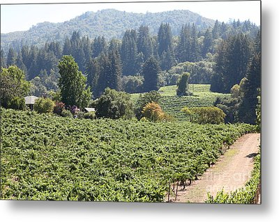 Sonoma Vineyards In The Sonoma California Wine Country 5d24585 Metal Print by Wingsdomain Art and Photography