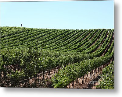 Sonoma Vineyards In The Sonoma California Wine Country 5d24588 Metal Print by Wingsdomain Art and Photography