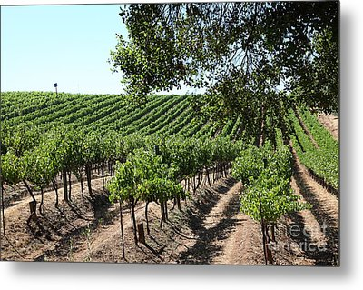 Sonoma Vineyards In The Sonoma California Wine Country 5d24594 Metal Print by Wingsdomain Art and Photography