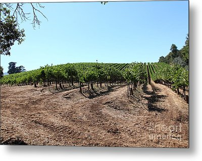 Sonoma Vineyards In The Sonoma California Wine Country 5d24597 Metal Print by Wingsdomain Art and Photography