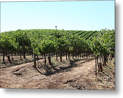 Sonoma Vineyards In The Sonoma California Wine Country 5d24598 Metal Print by Wingsdomain Art and Photography
