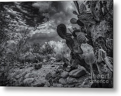 Metal Print featuring the photograph Sonoran Desert 15 by Mark Myhaver