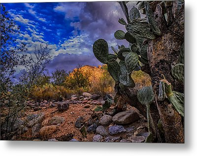 Sonoran Desert 54 Metal Print by Mark Myhaver