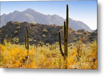 Sonoran Desert Beauty Metal Print by Betty LaRue