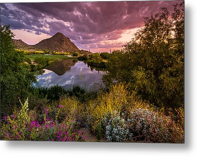 Sonoran Desert Spring Bloom Sunset  Metal Print