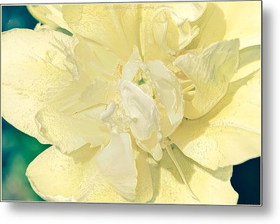 Soothing Daffodils Metal Print by Sonali Gangane