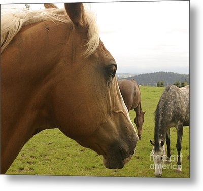 Metal Print featuring the photograph Sorrel Horse Profile by Belinda Greb